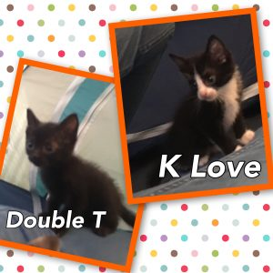 double-tt-and-klove