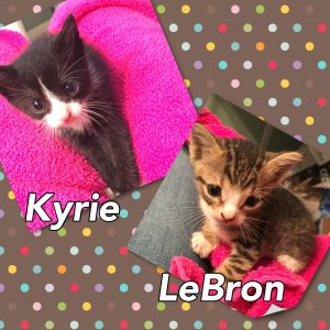 kyrie-and-lebron